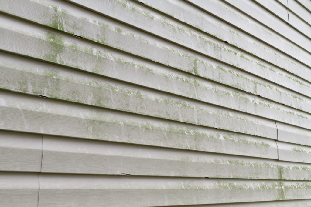 Are You Dealing with Algae or Mold? Learn How to Tell the Difference